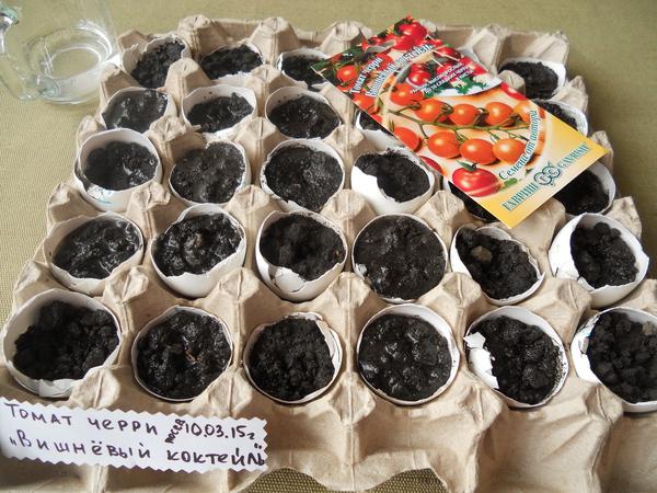 Как вырастить рассаду помидоров в яичной скорлупе Шаг 10