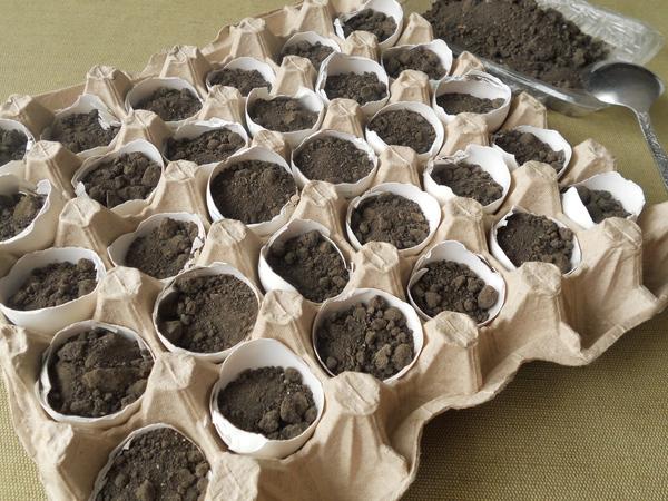 Как вырастить рассаду помидоров в яичной скорлупе Шаг 3