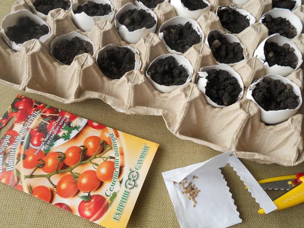 Как вырастить рассаду помидоров в яичной скорлупе Шаг 5