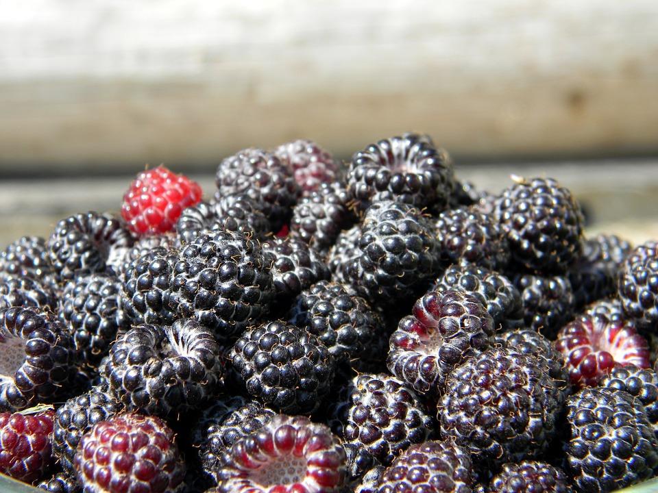 Черная малина: опыт посадок Урожай