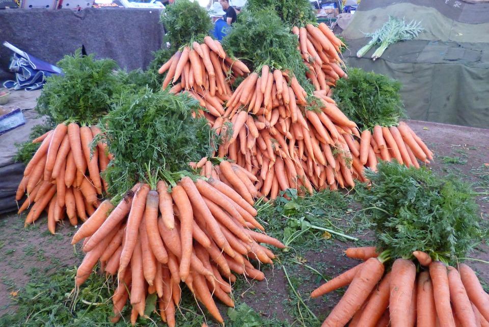 Как посадить морковь, чтобы получить богатый урожай Морковь