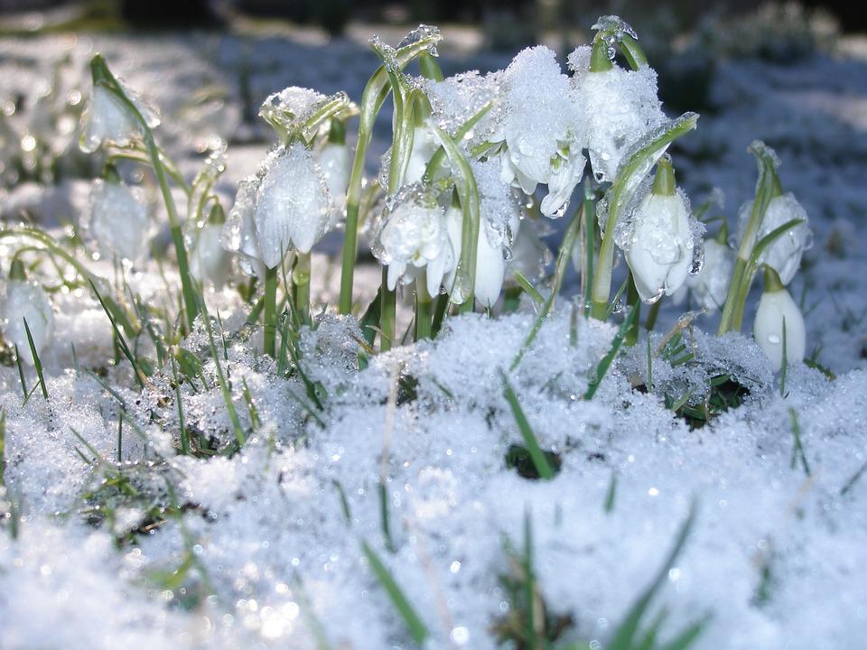 Подснежники Зима