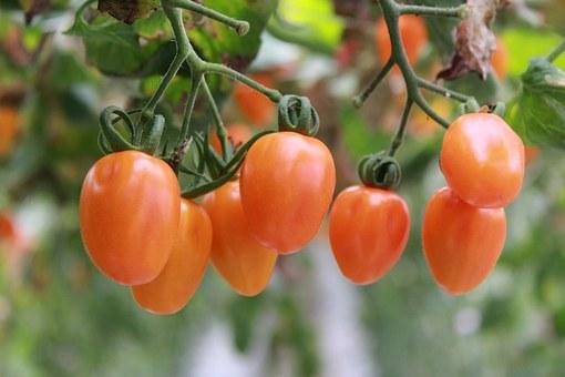 Пошаговая инструкция по посеву семян помидоров в яичную скорлупу Куст