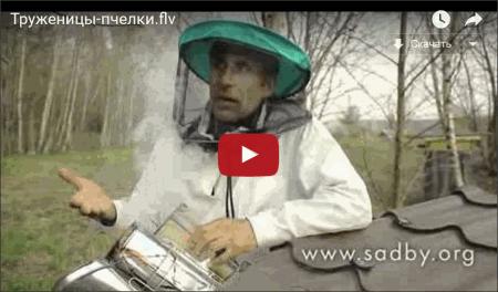 Про пчел