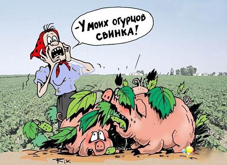 На завалинке: Свинка