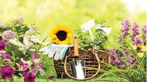 Работы в саду и огороде в июне