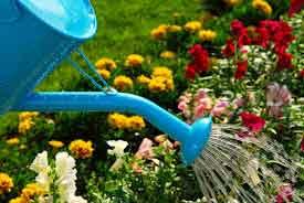 Работы в июле в огороде и в саду
