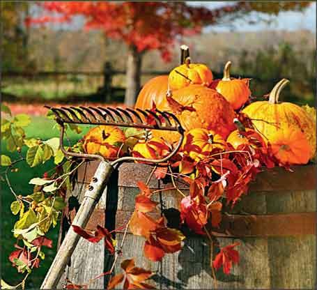 Работы в саду и огороде в октябре