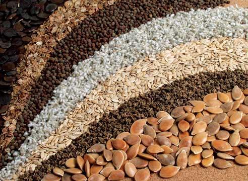 Как хранить собранные семена