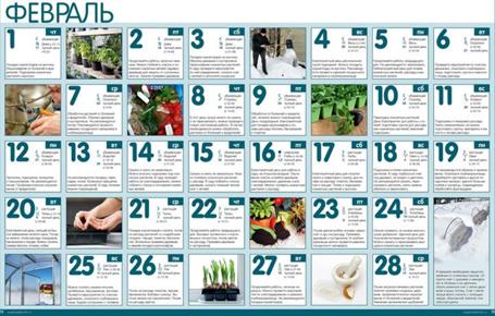 Работы в саду и огороде в феврале 1