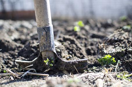 Работы в огороде в апреле 1