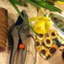 Работы в саду и огороде в марте